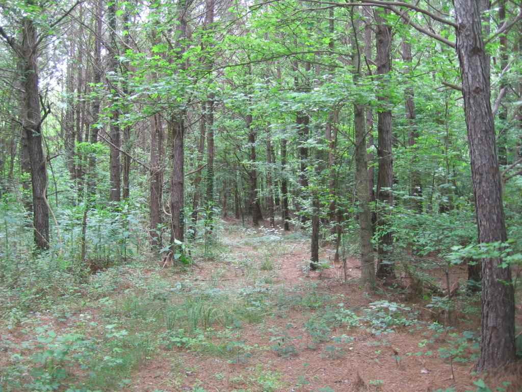 Carroll county 55 acres camp house 4 corner properties for Fishing camps for sale in mississippi