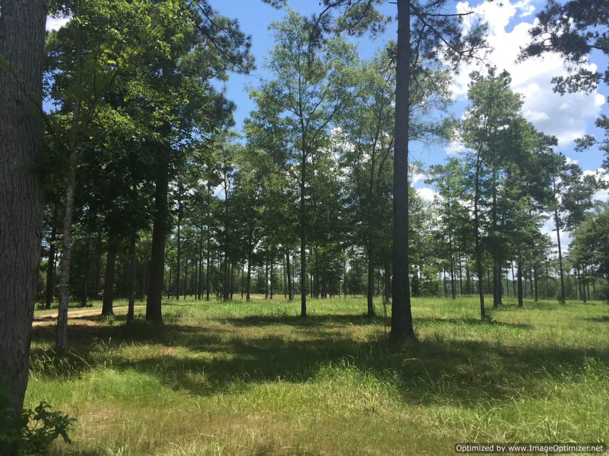 12 Lincoln County Ms Lakefront Property For Sale 4