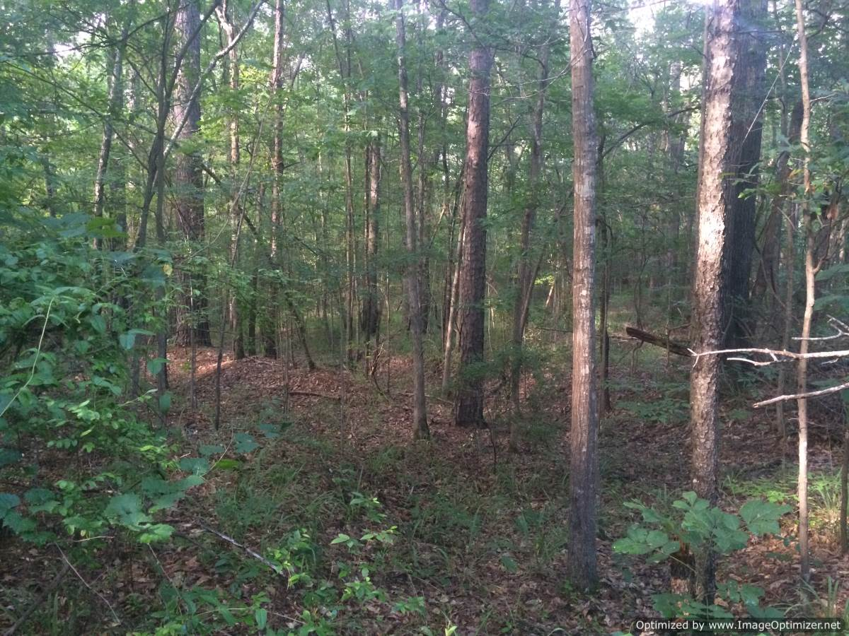 Mississippi rankin county sandhill - Rankin County Ms Residential Land For Sale