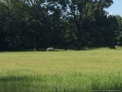1. Madison County MS Horse Property For Sale