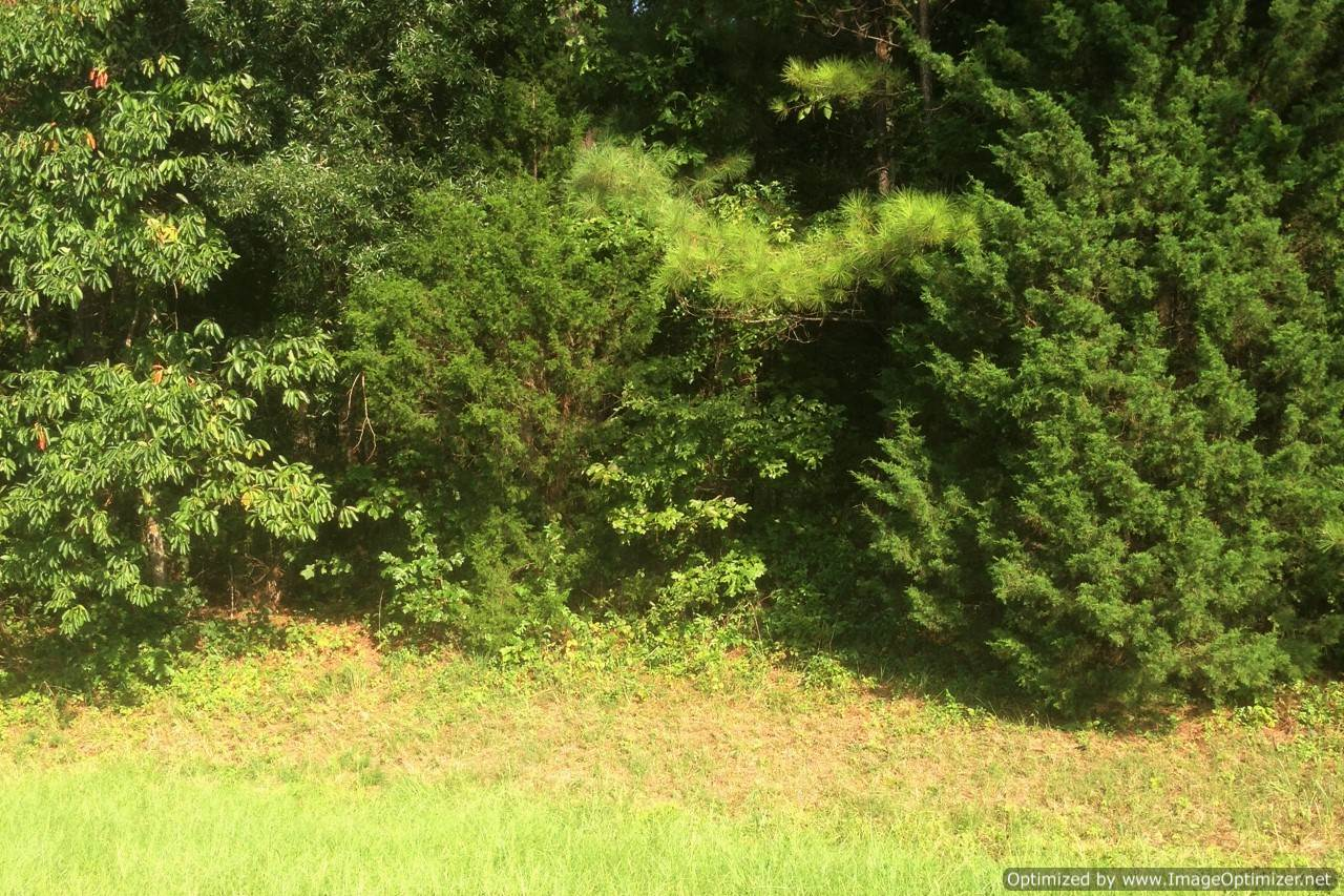 Mississippi rankin county sandhill - Vacant Commercial Lot