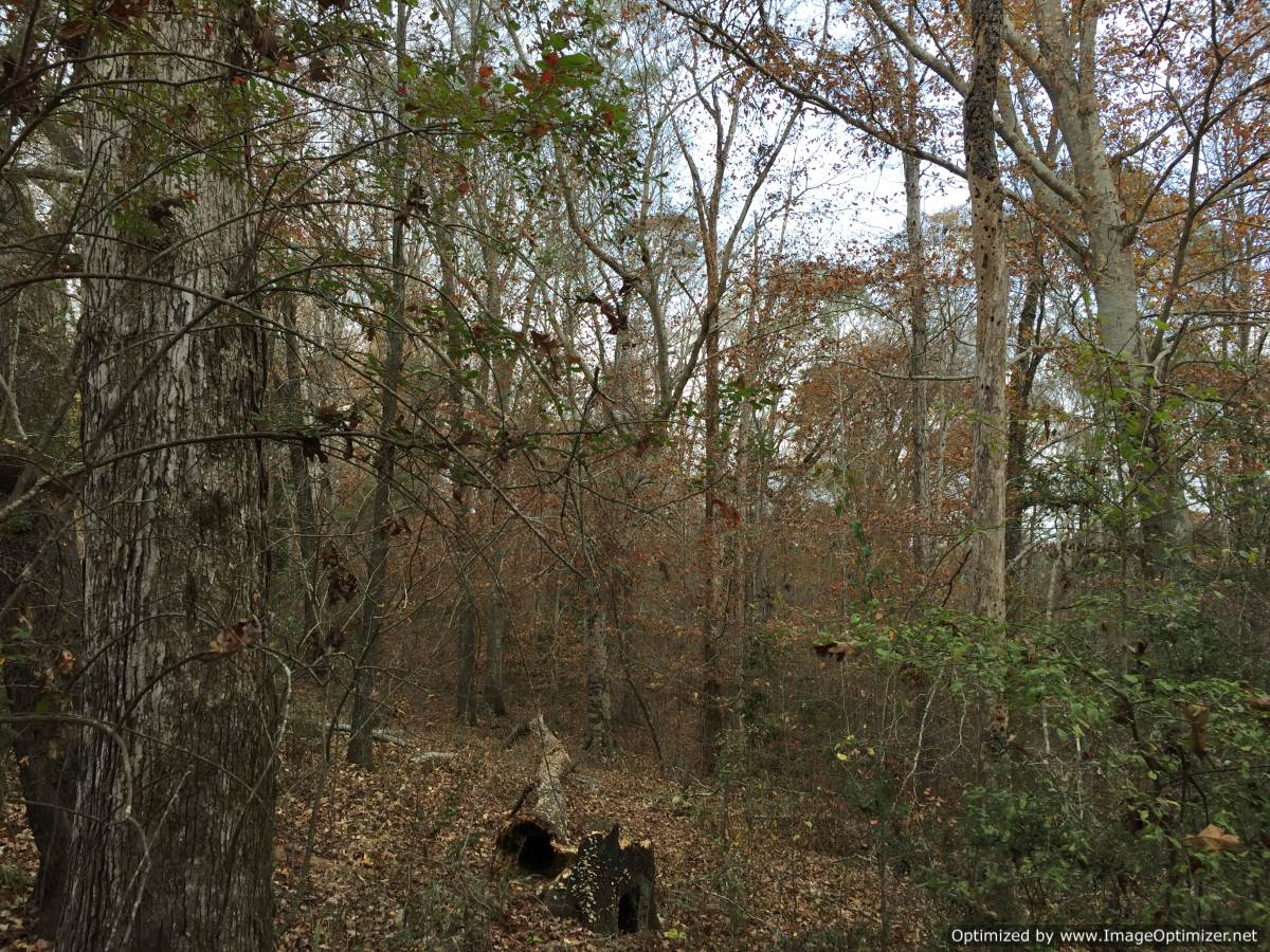 37 Hunting Land For Sale In Hazlehurst Ms 4 Corner