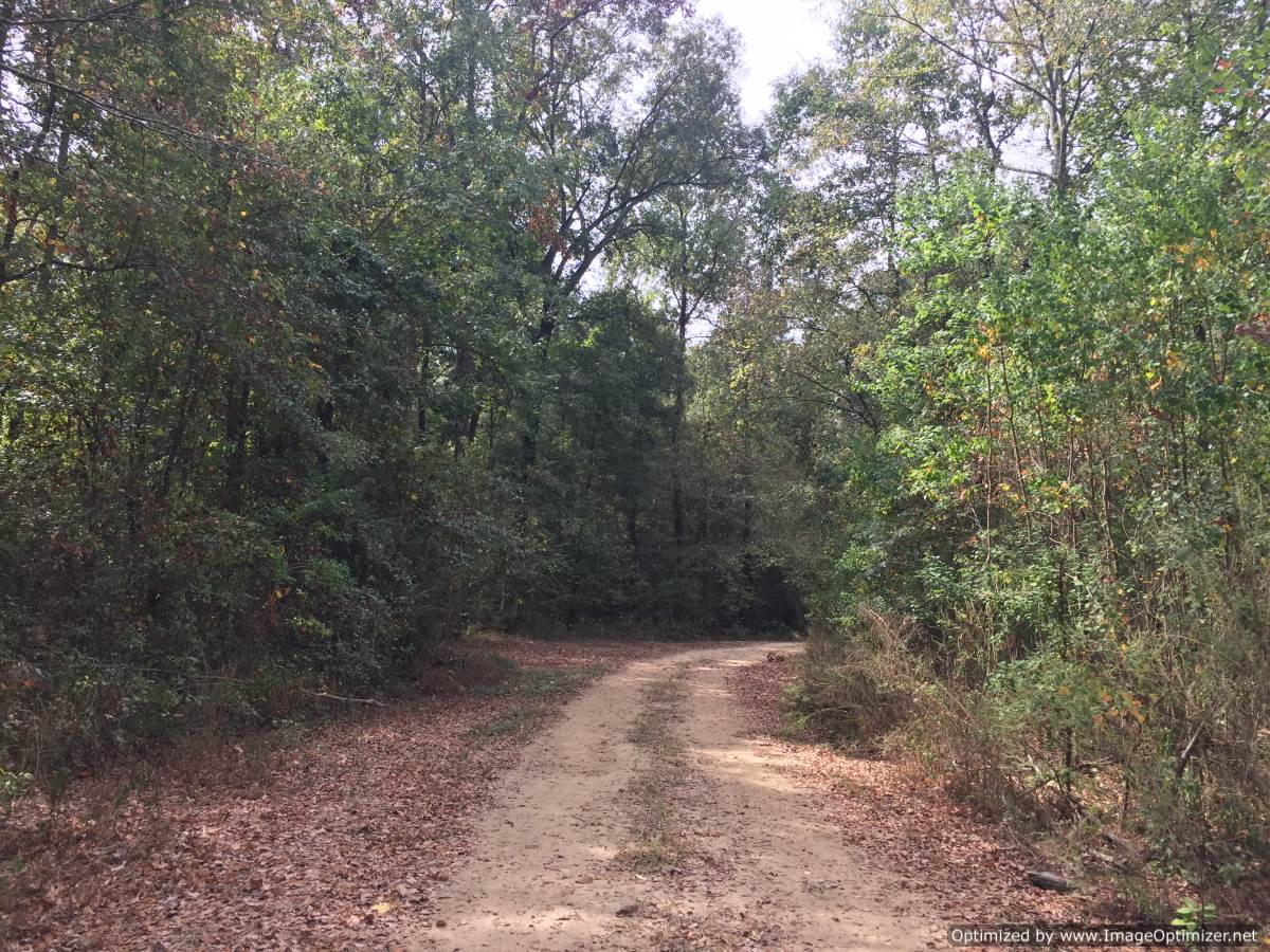 Mississippi rankin county sandhill - 24 Land For Sale In Rankin County Ms