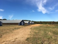 covington-county-ms-farm-land-for-sale