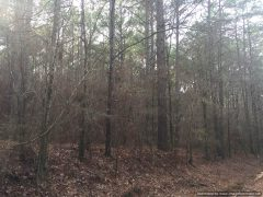 timberland-for-sale-in-holmes-county-ms